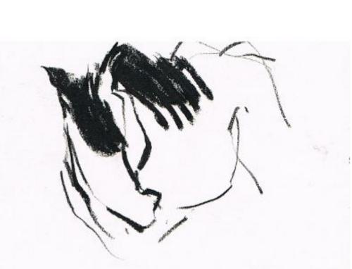 Equus Paard Haflinger
